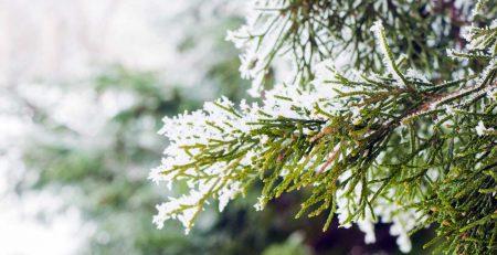 Kış Bahçesi Nedir? Nasıl Yapılır?